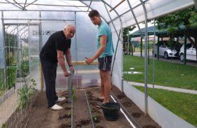 Sajenje plodovk in redčenje plodičev 💚🍅🍆🌶🍎🍏🍑