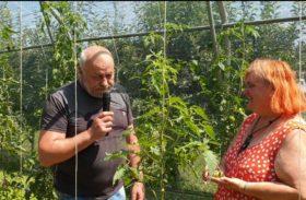 Nasveti na vrtu 🍅 Miša Pušenjak